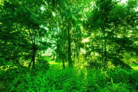 Bosque verde | Descargar Fotos gratis