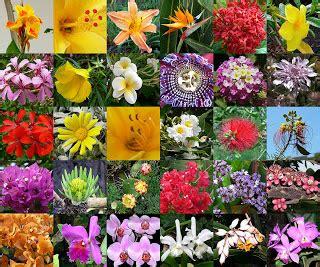 Botánica y Herbología en Añaza