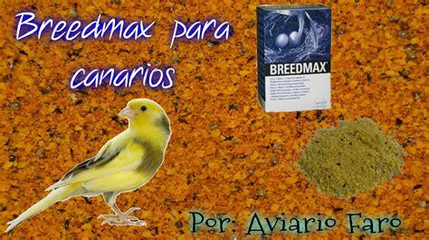 Bredmax para canarios, antes y durante la cría   YouTube