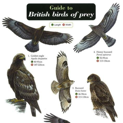 British Birds of Prey - Peoples Trust for Endangered Species