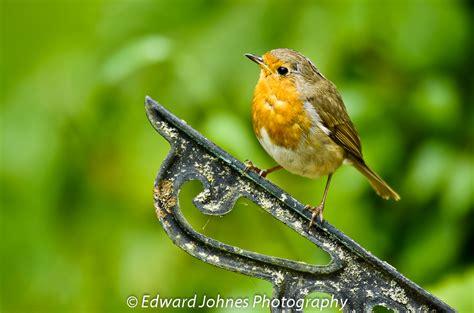 BRITISH WILD BIRDS / Gallery / Home    In The Wild ...