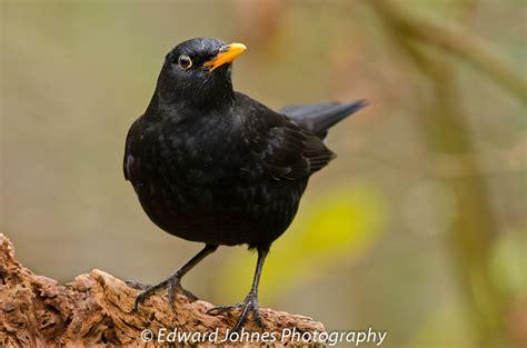 BRITISH WILD BIRDS / Gallery / Home - 'In The Wild ...