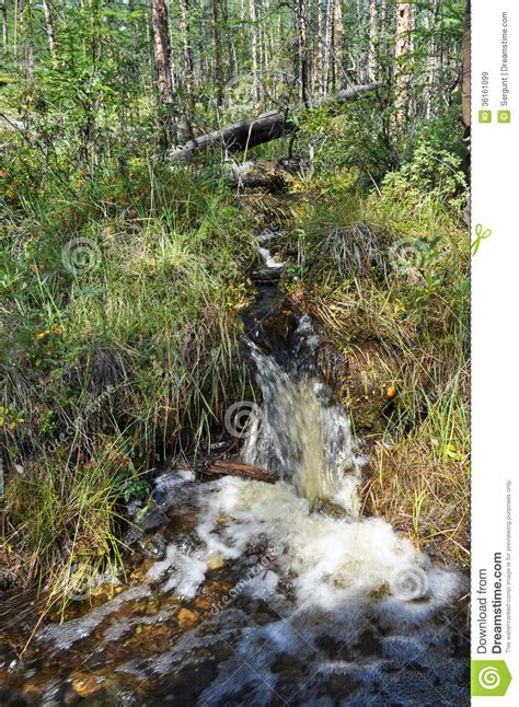 Brook in the grass. stock image. Image of nature, lake ...