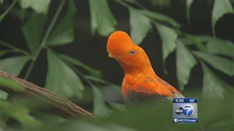 Brookfield Zoo opens new tropical birds exhibit ...