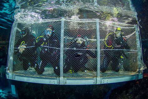 Bucear con tiburones, a tu alcance en L'Aquàrium de Barcelona