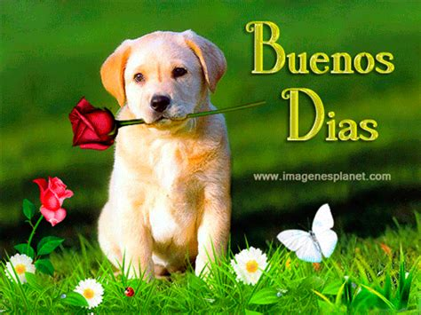 BUENOS DIAS con imagenes bonitas de perrito con rosas ...