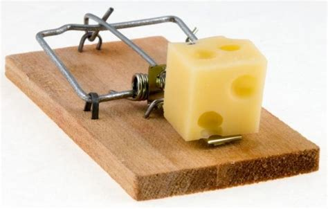 Building on the Word – Beware of the Mousetrap!