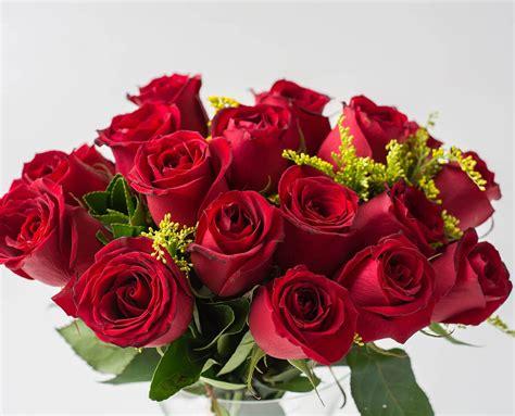 Buquê de Rosas Vermelhas   Buquê 20 Flores | Isabela Flores