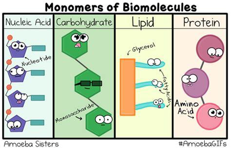 Burgess, Lauren / Unit 3: Biomolecules