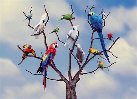 Burung Beo Warna · Foto gratis di Pixabay