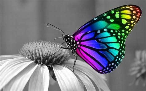 Butterflies and Hummingbirds in Your Garden   Surf'n Beach ...