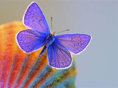 Butterflies - Butterflies Wallpaper (12207218) - Fanpop