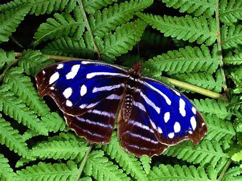 Butterflies images Beautiful Butterflies HD wallpaper and ...