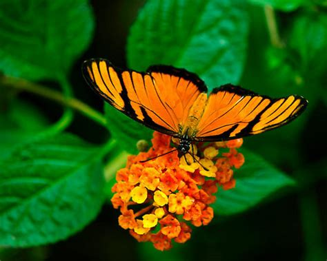 Butterflies images Rare Butterflies wallpaper and ...