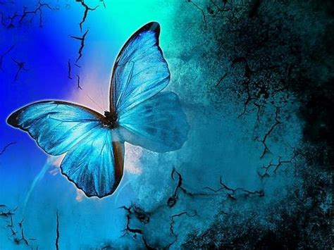 Butterflies images Shades Of Blue HD wallpaper and ...