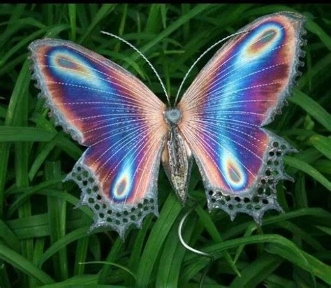 Butterflies on Pinterest