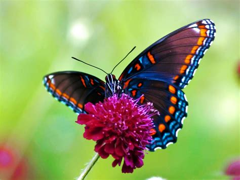 Butterfly Desktop wallpapers ~ Allfreshwallpaper