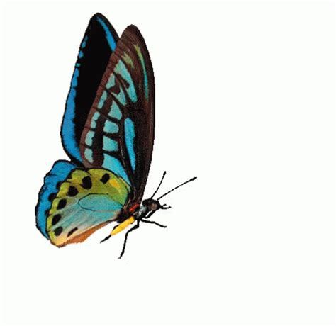 Butterfly GIF - Butterfly - Discover & Share GIFs