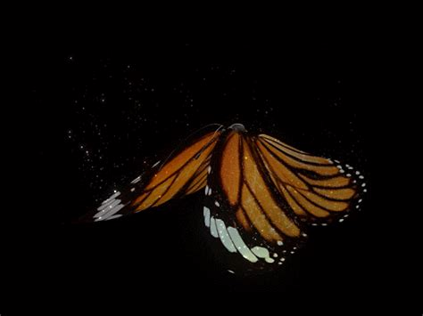 Butterfly GIF - Find & Share on GIPHY