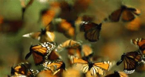 butterfly gif on Tumblr