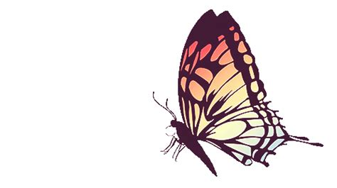 Butterfly gif | Tumblr