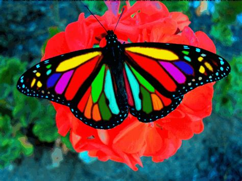 Butterfly Multicolored by OPTILUX on DeviantArt