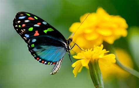 Butterfly release - Articles - Easy Weddings