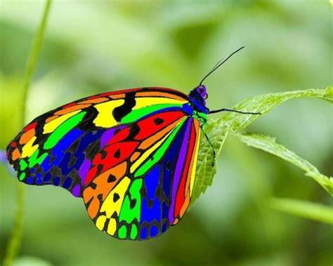Butterfly wallpaper | 1280x1024 | #40489