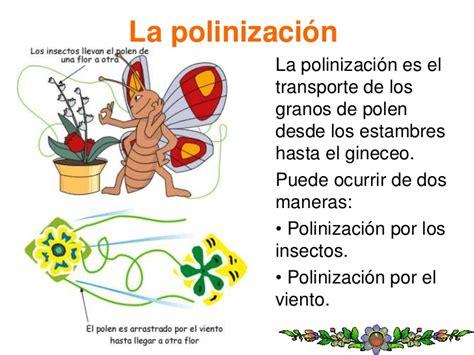 C. Medio LAS PLANTAS Tercer ciclo E. Primaria