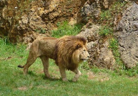 Cabárceno: ver animales y disfrutar de la naturaleza en ...