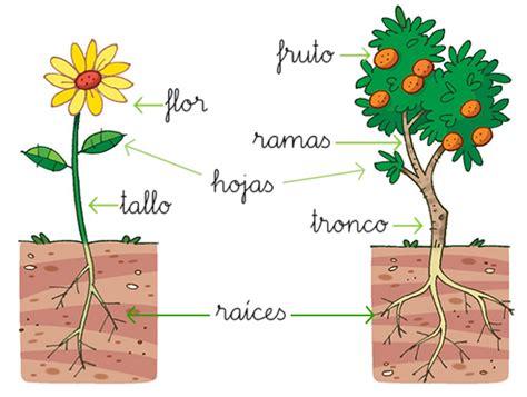 Cabecitas pensantes en acción: Plantas
