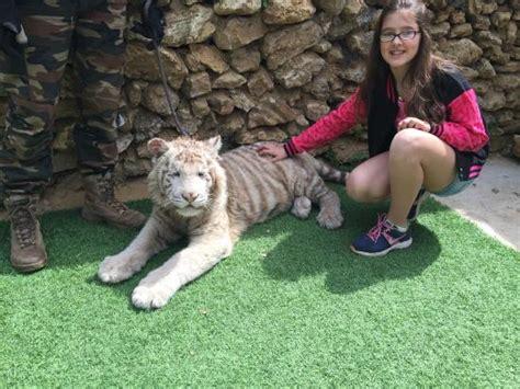 Cachorro de Leopardo Apadrinado por nosotros: fotografía ...