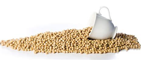 Cada vez son más personas las que consumen soja, ¿por qué ...