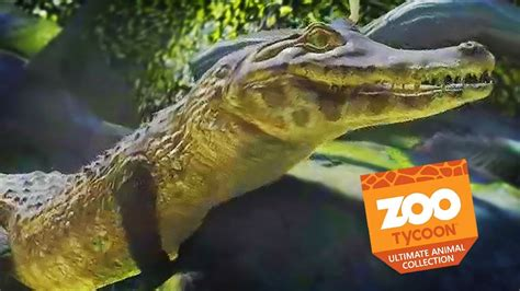 CAIMANS AND CATASTROPHE | Zoo Tycoon : Ultimate Animal ...