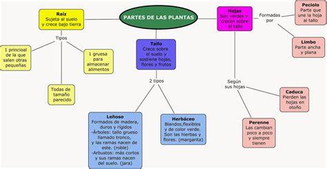 CAJÓN DE PRIMARIA: NATURALES  TEMA 5 2ª PARTE: LAS PLANTAS