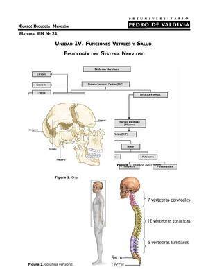 Calaméo   Anatomia Sistema Nervioso Central