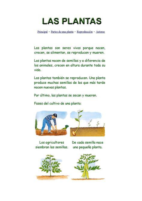 Calaméo - Las plantas