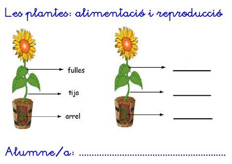 Calaméo   Plantes reproducció i parts d una flor