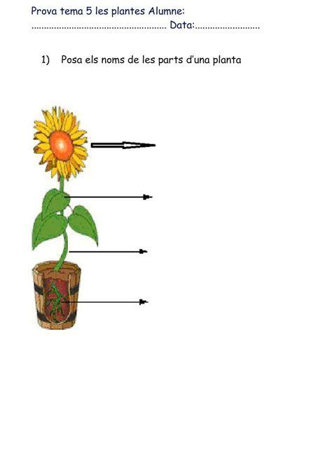 Calaméo   Prova Tema 5 Les Plantes