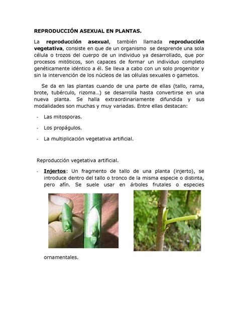Calaméo   REPRODUCCIÓN ASEXUAL EN PLANTAS