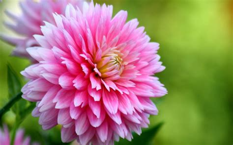 Calendario de flores de temporada: ¿qué florece en cada ...