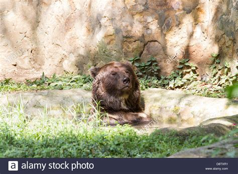 Cali Zoo Stock Photos & Cali Zoo Stock Images   Alamy