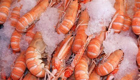 Calidad insuperable. Los Marinos Jose – Gastro News Online