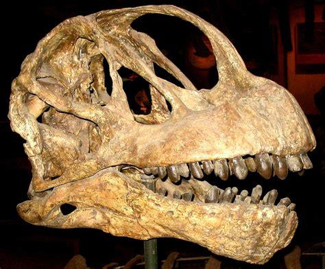 Camarasaurus — Wikipédia