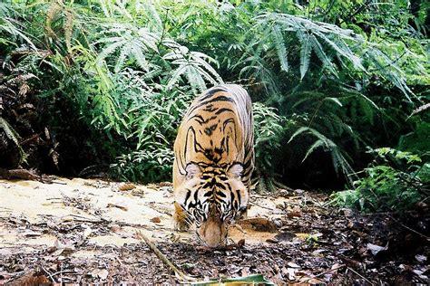 Camera traps | WWF Italy