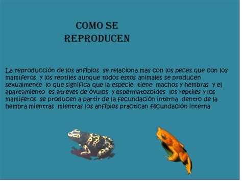 Camila reyes anfibios 8c