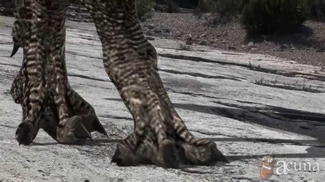 caminando entre dinosaurios - YouTube