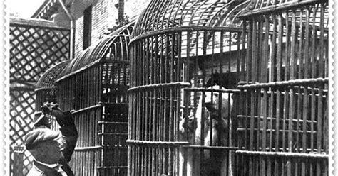 Caminando por Madrid: El día en que el oso del zoo se escapó