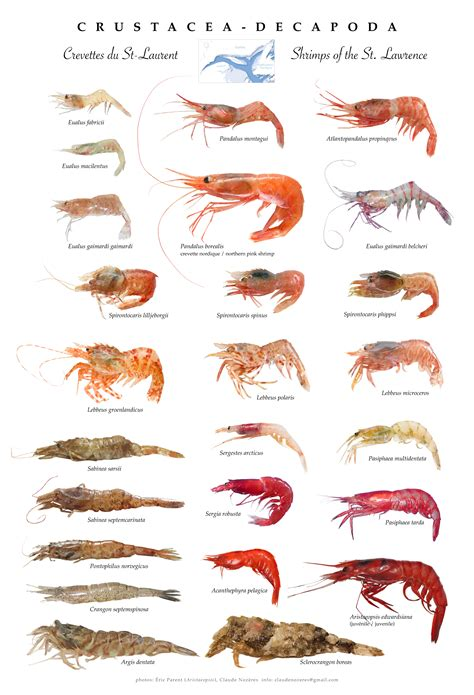 Canadian Register of Marine Species   Photogallery