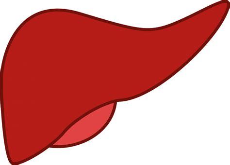 Cáncer de hígado | Qué es, síntomas, diagnóstico ...
